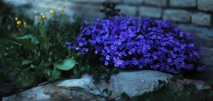 Flowers under moonlight